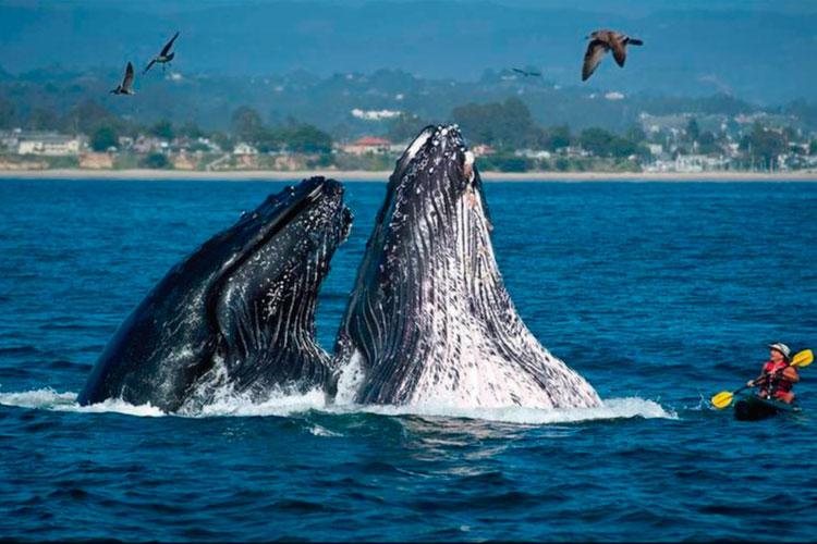 Whales in Peru