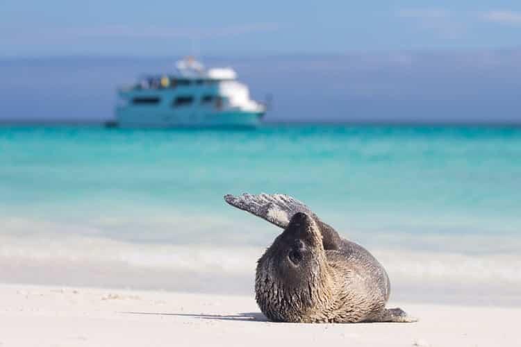 Galapagos Ecuador Travel
