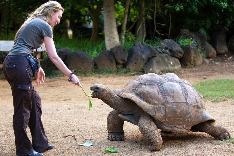 Giant Turtle Ecuador Travel