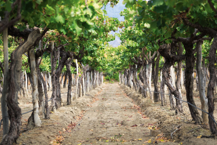 Cayafate Wineries Argentina Travel