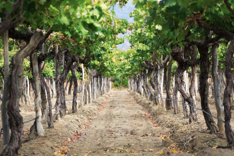 Cayafate Wineries Argentina Travel
