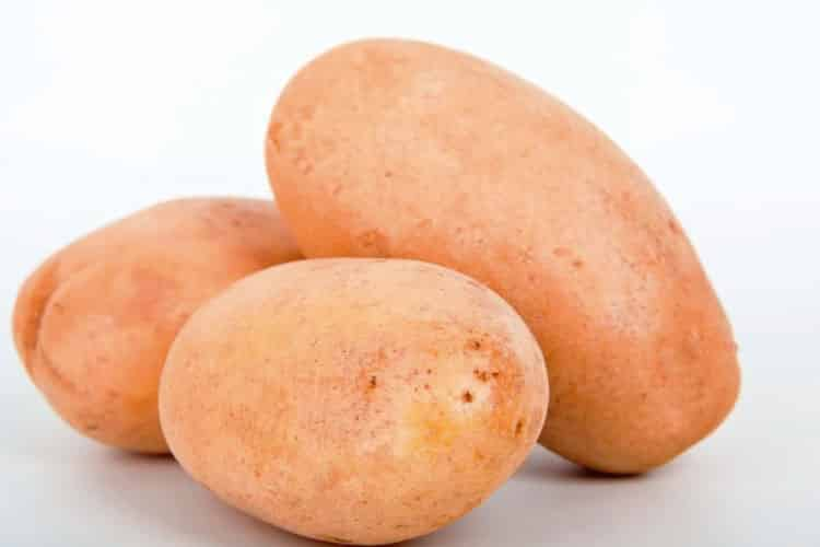 canchan potatoe