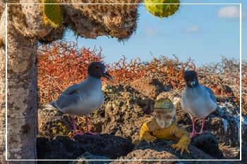Wondrous wildlife Galapagos