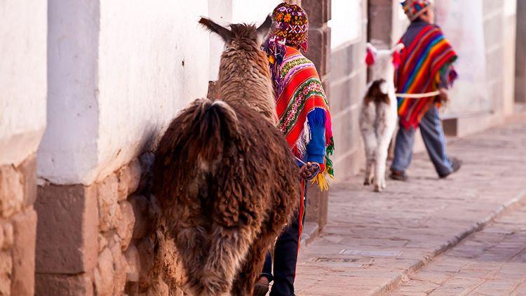3. The Incas domesticated very few animals