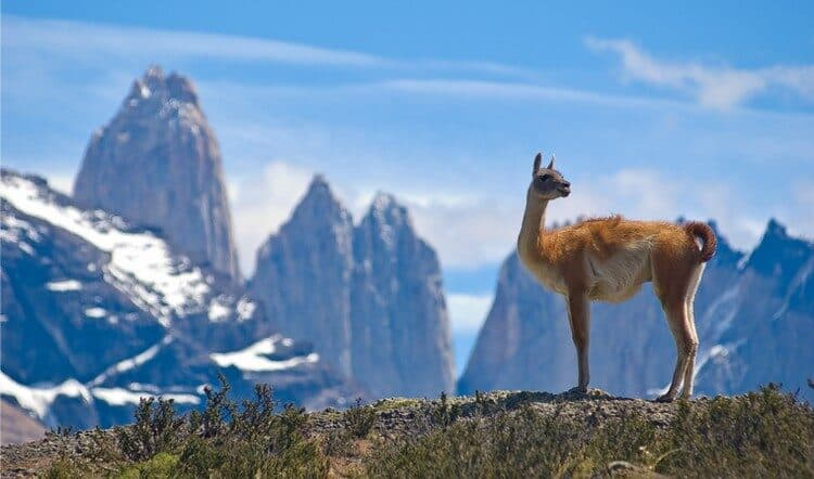 Chilean Patagonia: 4 Important Things about Hiking in Torres del Paine