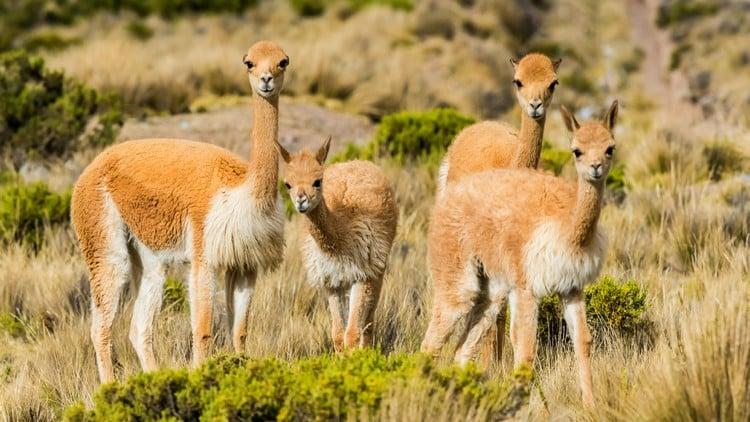 Nature Travel Peru