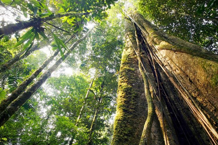 Jungle Peru Adventure