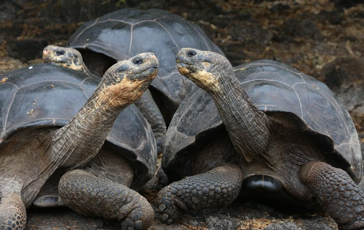 Unforgettable Galapagos honeymoon